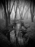 Forrest Fog Stock Image