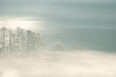 Forrest and Fog at Chiang dao,Chiangmai,Thailand. Beautiful Forrest and Fog at Chiang dao,Chiangmai,Thailand Stock Image