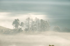 Forrest and Fog at Chiang dao,Chiangmai,Thailand Royalty Free Stock Photo