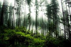 Forrest foncé images stock