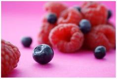 Forrest fruit Stock Images