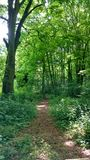 Forrest-Grün Stockbild