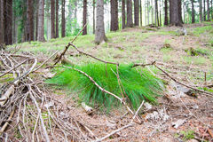 Forrest grass Stock Images