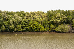Forrest of green trees on mountainside with river and bank. Royalty Free Stock Photo