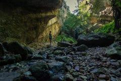 Forrest i en grotta Arkivfoton