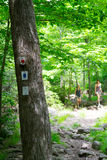 Forrest in im Hinterland NYC stockfoto