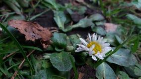 Forrest kwiaty obraz royalty free