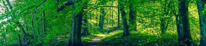 Forrest lövverk med gröna träd Arkivbilder