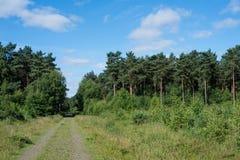 Forrest ślad w Alerthorpe drewnach Zdjęcie Stock