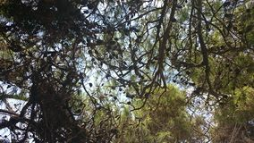 Forrest in Laganas, Zakynthos, Greece Royalty Free Stock Image