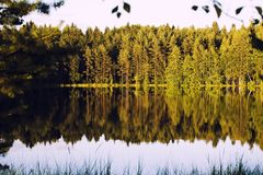 Forrest lake with reflection Royalty Free Stock Images