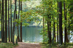 Forest lake in sunny day Royalty Free Stock Images