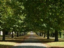 Forrest lane in October Stock Photography