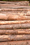 Forrest logs in mountains Royalty Free Stock Photography