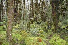 Forrest mech Zdjęcie Stock