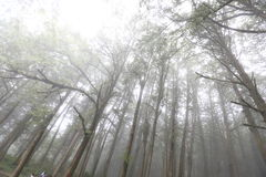 Forrest in mist. Forest in mist at Taroko National Park Stock Photo