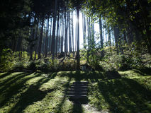 FORREST IN THE MORNING Royalty Free Stock Images