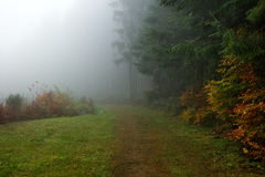 Forrest in morning fog Royalty Free Stock Photography