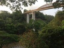 Forrest most zdjęcie royalty free