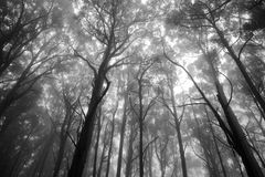 Forrest. Mystical view of forrest tree tops in black and white royalty free stock photo