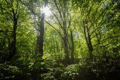 Forrest na primavera imagem de stock royalty free