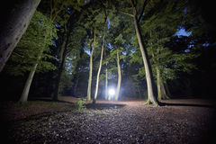 Forrest in the night with spooky light.  royalty free stock photos