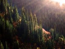Forrest no outono com névoa e luz solar Fotos de Stock Royalty Free