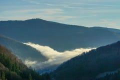 Forrest noir avec le genre bleu d'arbres de vallée de lueur de lumière de nuage et d'hiver de Forrest de sentiment images stock
