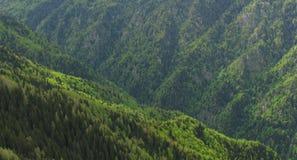 Forrest op de heuvels Royalty-vrije Stock Foto
