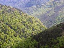 Forrest op de heuvels Stock Afbeelding