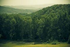 Forrest op heuvels Stock Foto's