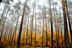 Forrest oscuro Foto de archivo libre de regalías
