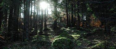 Forrest oscuro Imagen de archivo libre de regalías