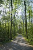 Forrest path. A forrest path in the green spring Stock Photos