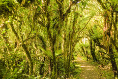 Forest path Royalty Free Stock Photo