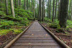 Forrest perspective. Old growth forrest with wooden sidewalk stock images