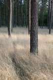 Forrest profond images stock