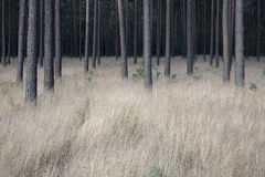 Forrest profond Image stock