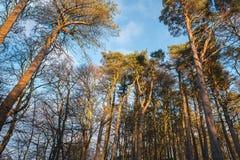 Forrest Reflected Late Afternoon Light otoñal en el P de Escocia imagenes de archivo