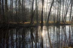 Forrest and river, Elbe river Stock Image