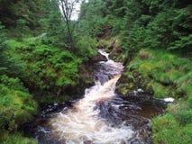 Forrest river. Landscape Stock Photo