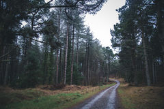 Forrest. Road Through Forrest in Anglesey Stock Photo