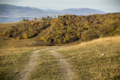 Forrest road at fall Stock Photo