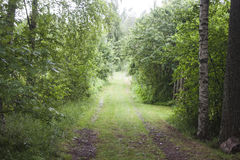 Forrest road Stock Photos