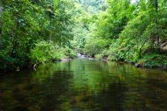 Forrest rzeka Zdjęcia Stock