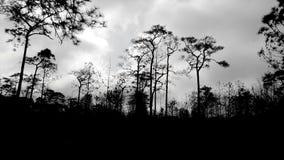 Forrest scuro Fotografie Stock Libere da Diritti