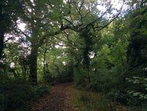 Forrest-Straße zu einem Bogen von Büschen stockfotografie