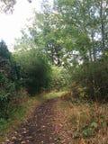 Forrest-Straße zwischen Büschen stockfotografie