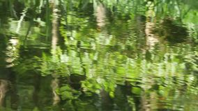 Forrest and stream stock video footage