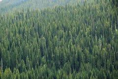 Forrest sul pendio di collina della montagna fotografia stock libera da diritti